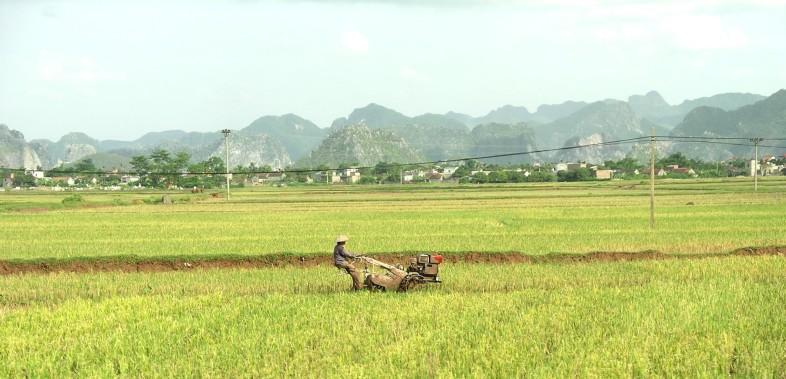 VietnamIMGP5767b